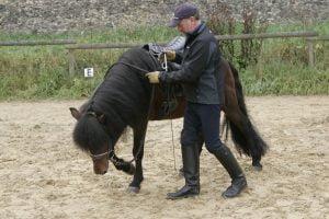 Reynir visar hesti nidur